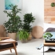 How To Change Your Home's Feng Shui